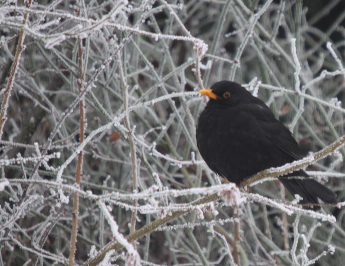 KitziBlog - Leben in Mainfranken » Ein paar Winterbilder aus meinen Garten