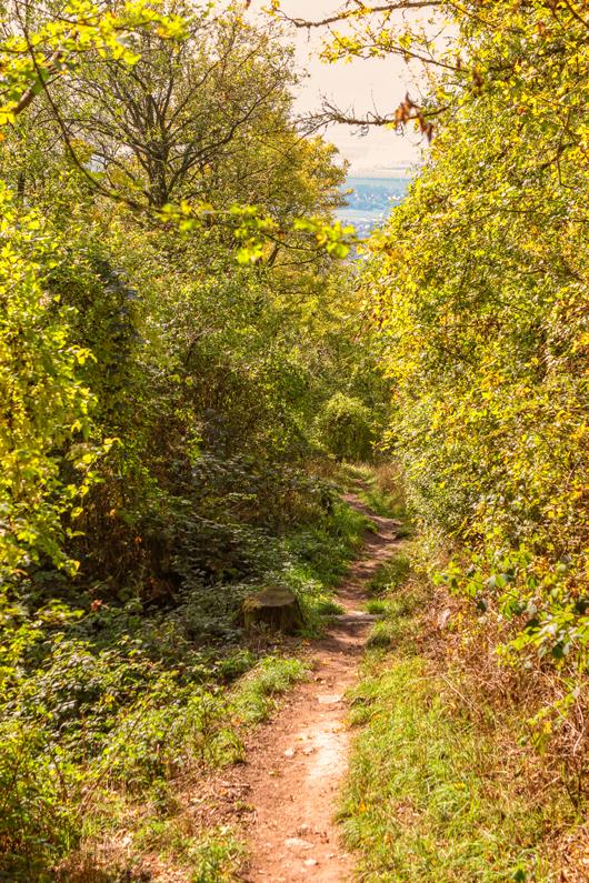 Herbstwald-am-Schwanberg