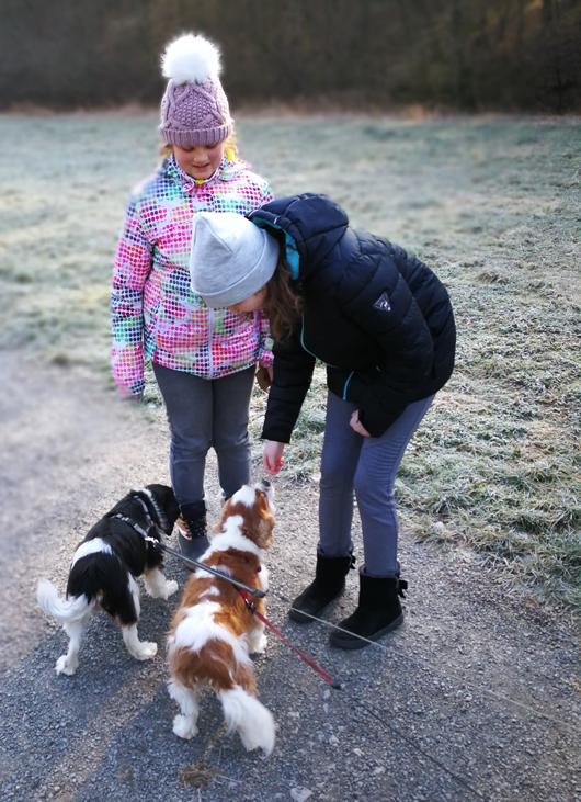 Hunde-ausführen-am-Tierheim-Kitzingen