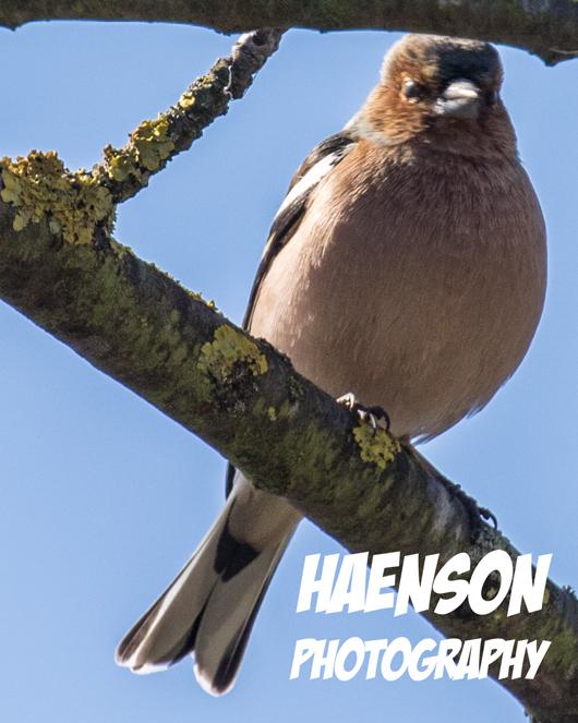 Vogelkunde-2